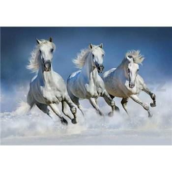 Fototapety Arabian Horses, rozmer 366 x 254 cm