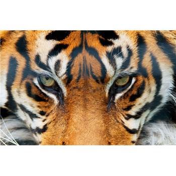 Fototapety Giant Art Tiger, rozmer 175 x 115 cm