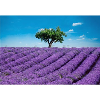 Fototapety Provence, rozmer 366 x 254 cm - POSLEDNÉ KUSY
