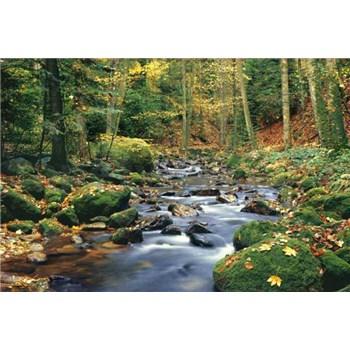 Fototapety Forest Stream, rozmer 366 x 254 cm