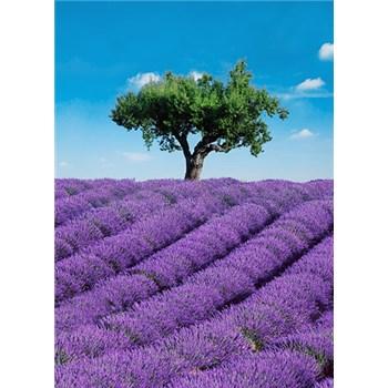 Fototapety Provence, rozmer 183 x 254 cm