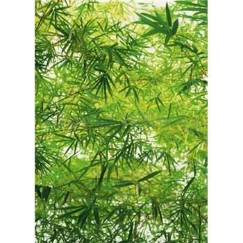 Fototapety Bamboo, rozmer 183 x 254 cm