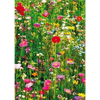 Fototapety Flower Field