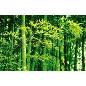 Fototapety Bamboo in Spring, rozmer 175 x 115 cm