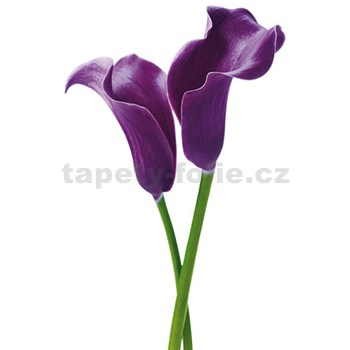 Fototapety Purple Calla Lilies, rozmer 115 x 175 cm