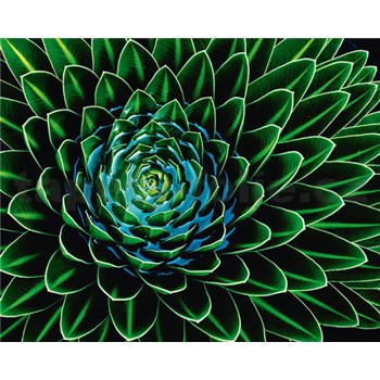 Vliesové fototapety Senecio Nivalis, rozmer 200 x 160 cm