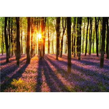 Vliesové fototapety Les Woodland At Dawn, rozmer 366 x 254 cm