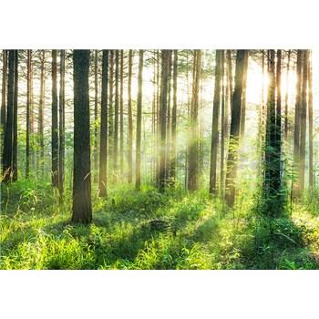 Vliesové fototapety les Sunset In The Woods, rozmer 366 x 254 cm