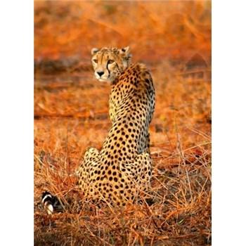 Fototapety leopard rozmer 184 x 254 cm
