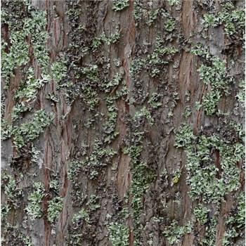 Papierové tapety na stenu kôra stromu