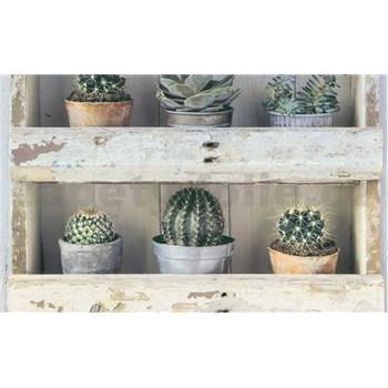 Papierové tapety na stenu Collection kaktusy v drevených policiach