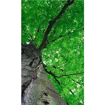 Vliesové fototapety koruny stromov rozmer 150 cm x 250 cm