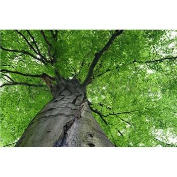 Vliesové fototapety koruny stromov rozmer 375 cm x 250 cm