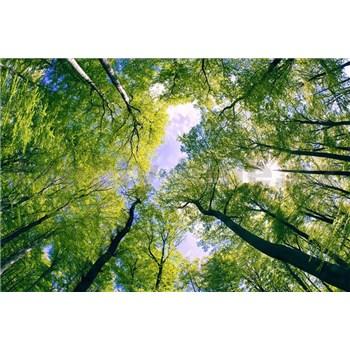 Vliesové fototapety stromy rozmer 375 cm x 250 cm