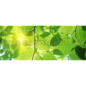 Vliesové fototapety zelené listy rozmer 375 cm x 150 cm