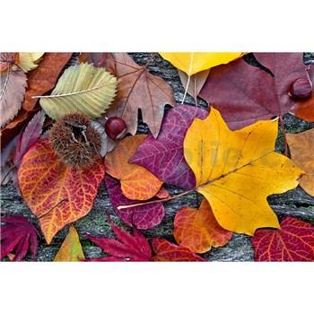 Vliesové fototapety farebné lístie rozmer 375 cm x 250 cm