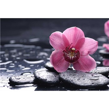 Vliesové fototapety orchidea s kameňmi rozmer 375 cm x 250 cm
