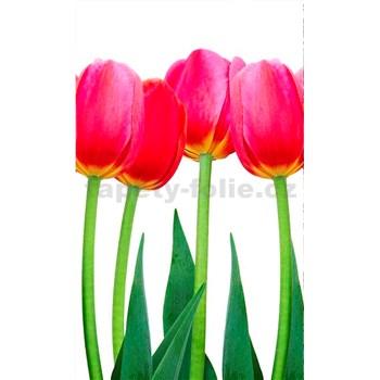 Vliesové fototapety tulipány rozmer 150 cm x 250 cm