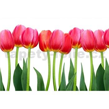 Vliesové fototapety tulipány rozmer 375 cm x 250 cm