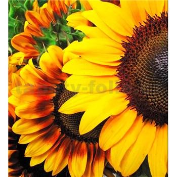 Vliesové fototapety slnečnica rozmer 225 cm x 250 cm