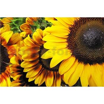 Vliesové fototapety slnečnica rozmer 375 cm x 250 cm