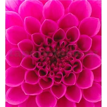 Vliesové fototapety ružové dahli rozmer 225 cm x 250 cm