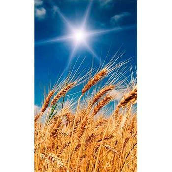 Vliesové fototapety pšeničné polia rozmer 150 cm x 250 cm