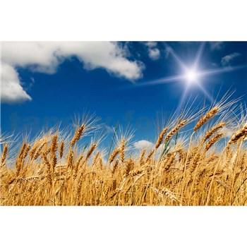 Vliesové fototapety pšeničné polia rozmer 375 cm x 250 cm