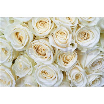 Vliesové fototapety biele ruže rozmer 375 cm x 250 cm