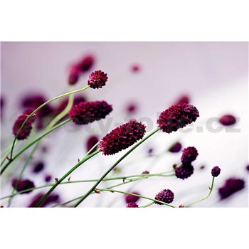 Vliesové fototapety kvetiny fialové rozmer 375 cm x 250 cm