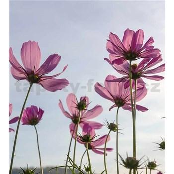 Vliesové fototapety kosmos kvety rozmer 225 cm x 250 cm