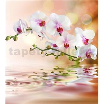 Vliesové fototapety biela orchidea rozmer 225 cm x 250 cm