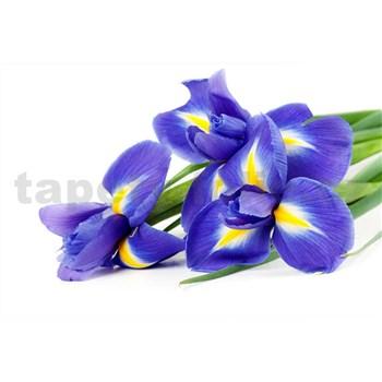 Vliesové fototapety iris rozmer 375 cm x 250 cm