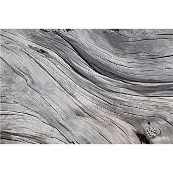 Vliesové fototapety textúra stromu rozmer 375 cm x 250 cm