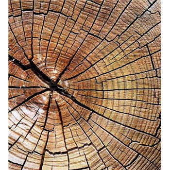 Vliesové fototapety letokruhy kmeňa rozmer 225 cm x 250 cm