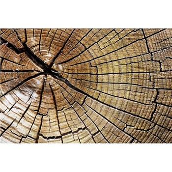 Vliesové fototapety letokruhy kmeňa rozmer 375 cm x 250 cm