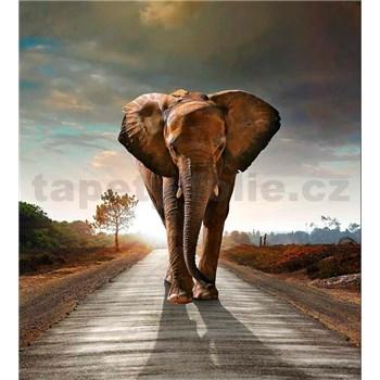 Vliesové fototapety slon rozmer 225 cm x 250 cm