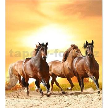 Vliesové fototapety kone pri západe slnka rozmer 225 cm x 250 cm