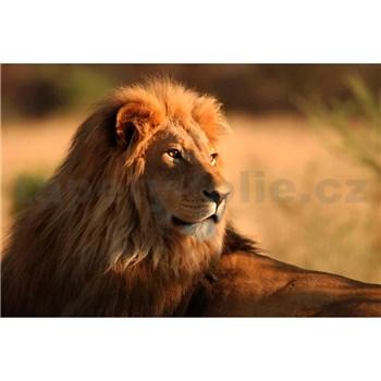 Vliesové fototapety lev rozmer 375 cm x 250 cm