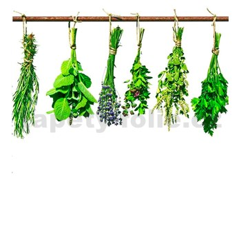 Vliesové fototapety bylinky rozmer 225 cm x 250 cm