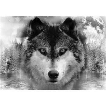 Vliesové fototapety vlk rozmer 368 cm x 254 cm