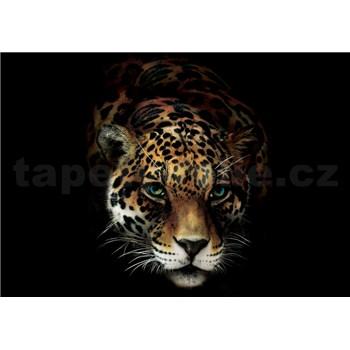 Vliesové fototapety jaguár rozmer 368 cm x 254 cm