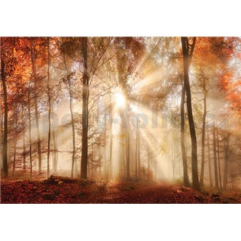 Vliesové fototapety les na jeseň, rozmer 416 cm x 254 cm