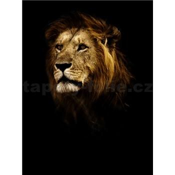 Vliesové fototapety lev rozmer 184 cm x 254 cm