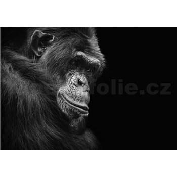 Vliesové fototapety šimpanz rozmer 368 cm x 254 cm