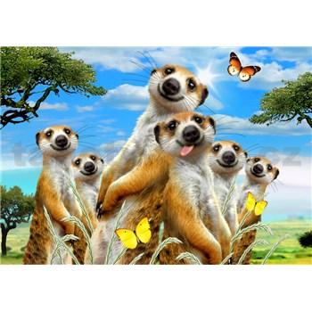 Vliesové fototapety selfie surikaty rozmer 368 cm x 254 cm