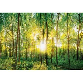Vliesové fototapety slnečný svit v lese rozmer 368 cm x 254 cm