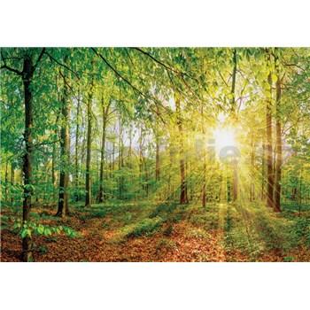 Vliesové fototapety lúče slnka v lese rozmer 368 cm x 254 cm