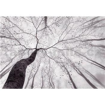 Fototapety koruna stromu rozmer 366 cm x 254 cm - POSLEDNÉ KUSY