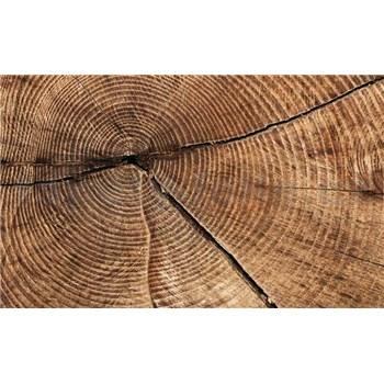 Fototapety drevo, rozmer 368 cm x 254 cm